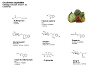 Cruciferous vegetables PPT Slide