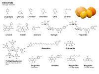 Citrus fruits PPT Slide