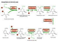 Biosynthesis of chorismic acid PPT Slide