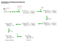 Biosynthesis of anthraquinone endocrocin PPT Slide