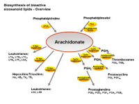 Biosynthesis of bioactive eicosanoids - Overview PPT Slide