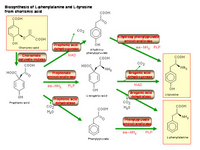Biosynthesis of L-phenylalanine and L-tyrosine from chorismic acid PPT Slide