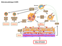 Molecular pathology of COPD PPT Slide