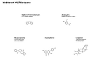 Inhibitors of NADPH Oxidases PPT Slide