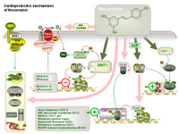 Cardioprotective mechanisms of resveratrol PPT Slide