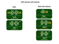 ROS Species with Radicals PPT Slide
