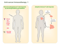 Anti-cancer Immunotherapy 1 PPT Slide
