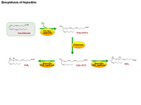 Biosynthesis of hepoxilins PPT Slide