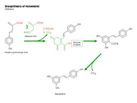 Biosynthesis of resveratrol PPT Slide