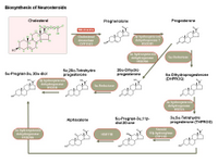 Biosynthesis of neurosteroids PPT Slide