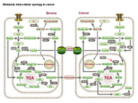 Metabolic intercellular synergy in cancer PPT Slide