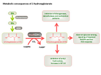 Metabolic consequences of 2-hydroxyglutarate PPT Slide